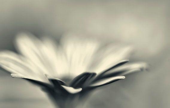 Solo bloem in zwart/wit van Ellen Driesse