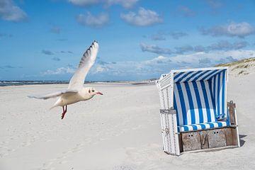 Strandkorb mit Möwe auf Sylt an der Nordsee von Animaflora PicsStock