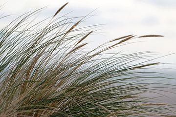 Dune d'herbe sur la plage sur