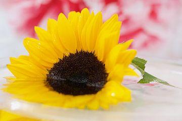 Eine gelbe Sonnenblume im Wasser von Wendy Tellier - Vastenhouw
