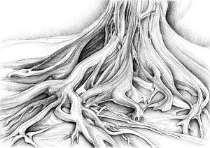 Ficus Macrophylla III von Adriana Mueller