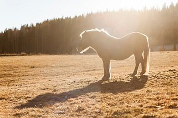 Paard van Andras Veres