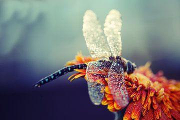keizerlibel met regendruppels van