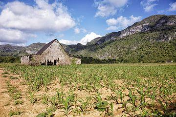 Boerderij voor het drogen van tabak in de vallei van Vinales, Cuba van Tjeerd Kruse
