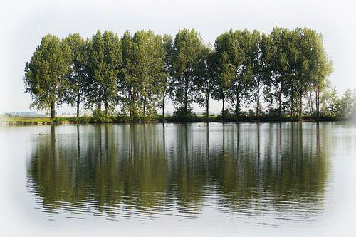 Een rij bomen langs een waterplas