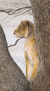 Junger Löwe im Schritt von Russell Hinckley