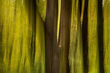 Bos in beweging van Hans Stuurman