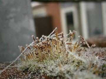 Mos landschapje in de winter van Colette Jut