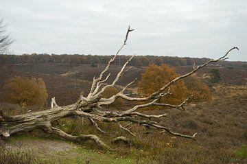 Gefallener Baum auf der Veluwe(2) von Gerard de Zwaan