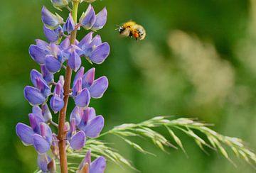 violette Blume mit fliegender Biene voller Pollen von Mieke Verkennis