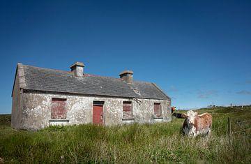 Huis is koeienstal op platteland van Ierland van Bo Scheeringa Photography