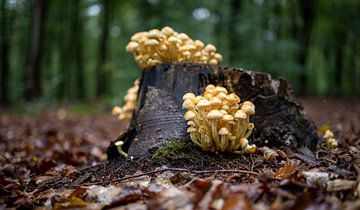 Herfst landschap met paddenstoelen van MPhotographer