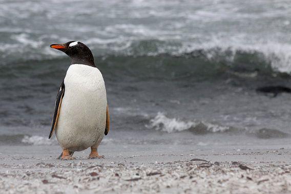 Ezelspinguïn op het strand van Antwan Janssen