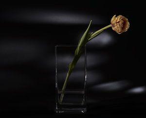 fleur solitaire sur Jan Fotografie