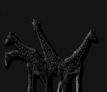 Giraffen in de nacht van ! Grobie
