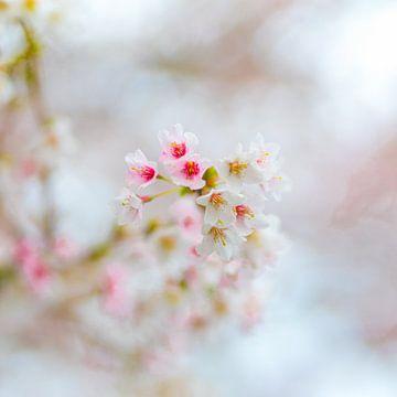 In de lente van Friedhelm Peters