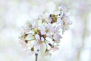Kirschblüte von Jeannette Penris