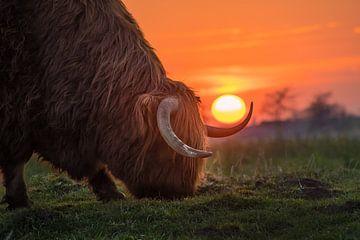 Kuh bei Sonnenuntergang von Wilco Bos