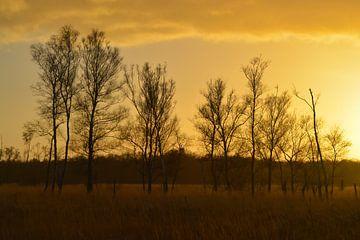 Zonsondergang op Groote Peel van