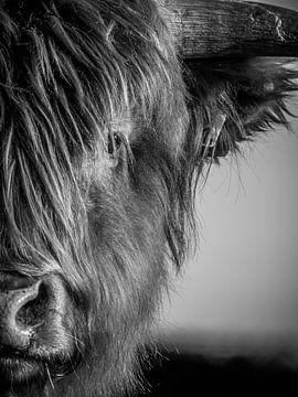 Portret van een Schotse Hooglander van Kayleigh Heppener