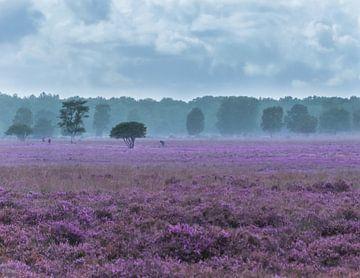 Regen kommt auf blühende Heide von Jasmijn Fotografeert