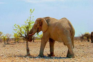 Elefant isst frische Blätter von Inge Hogenbijl