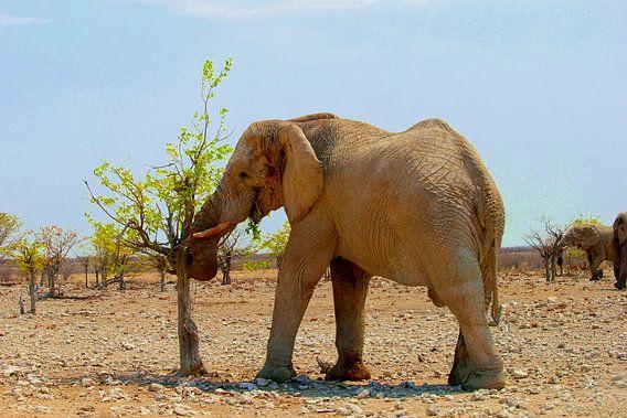 Afrikaanse olifant eet verse blaadjes
