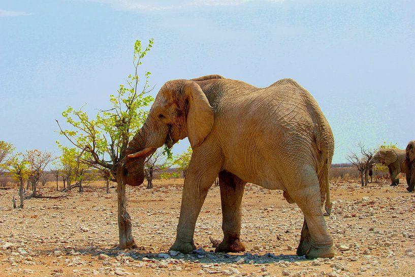 Olifant eet verse blaadjes van Inge Hogenbijl