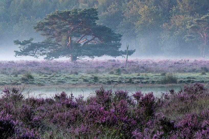 Heide und Morgennebel. von Anjo ten Kate