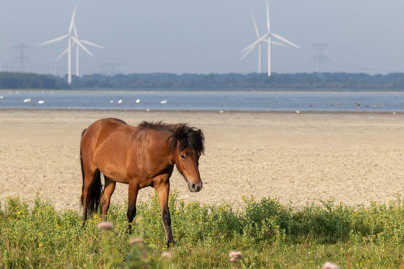 Freilaufendes Pferd ( Wildtiere ) von Anjella Buckens