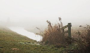Misty morning ... van