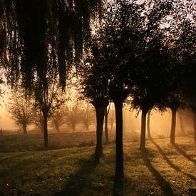 zonsopkomst van Yvonne Blokland