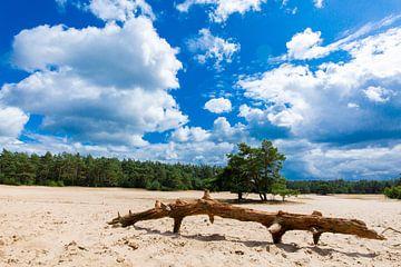 Boom op de zandvlakte. van Sander Maas