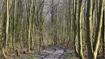 Wagenspoor tussen de bomen van Ingrid van Heeswijk