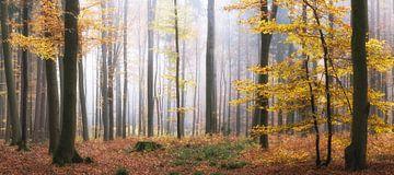 Waldpanorama - Leuchtender Wald im Herbst von Tobias Luxberg