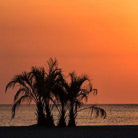 Palmen im Sonnenuntergang am Meer von Frank Herrmann