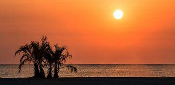 Palmbomen in de zonsondergang aan zee