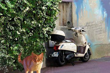 scooter kat van MD JO