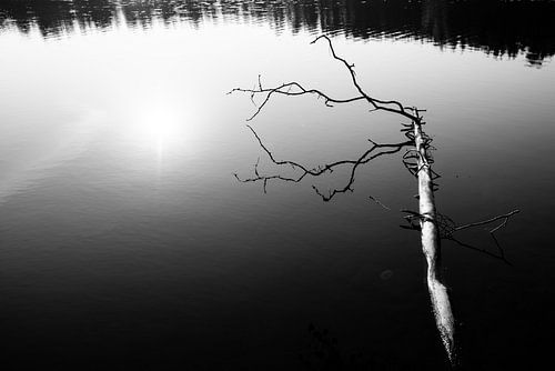 Zwart wit weerspiegeling