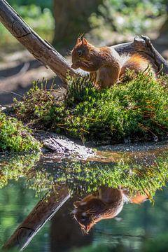 Eekhoorn aan de waterkant. van Marcel Pietersen