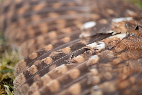 Vleugel van een bosuil