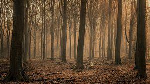 Wintermorgen im Wald von Toon van den Einde