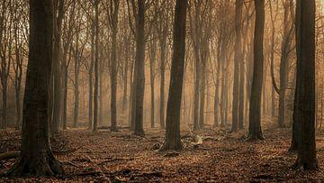 Wintermorgen in het bos van Toon van den Einde