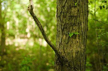 De boom in het bos von Sebastiaan van Hattum