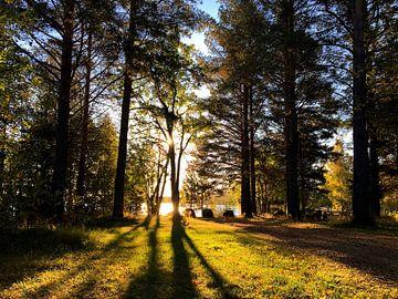 De dag wordt wakker bij een meer in de Zweedse bossen van Thomas Zacharias