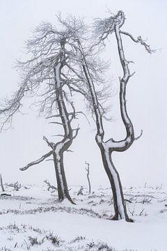 Hef die bevroren handen in de lucht van Joris Pannemans - Loris Photography