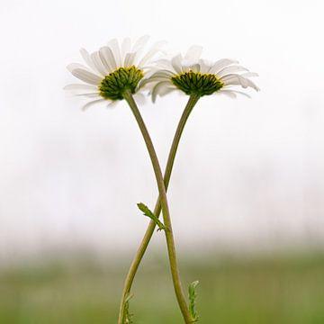 Verliefde bloemen van Wouter Bos