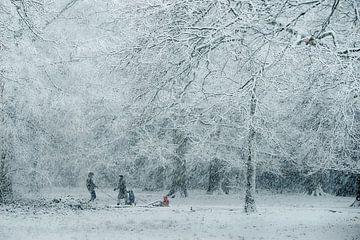 Rechtzeitig eingefroren . Veröffentlichtes Bild. von Saskia Dingemans
