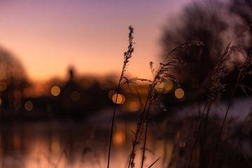 Sonnenaufgang zwischen den hohen Gräsern in Middelburg von Percy's fotografie