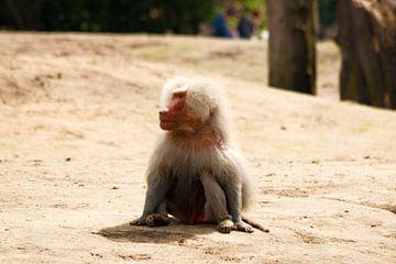 aap op de grond von Thamara Janssen